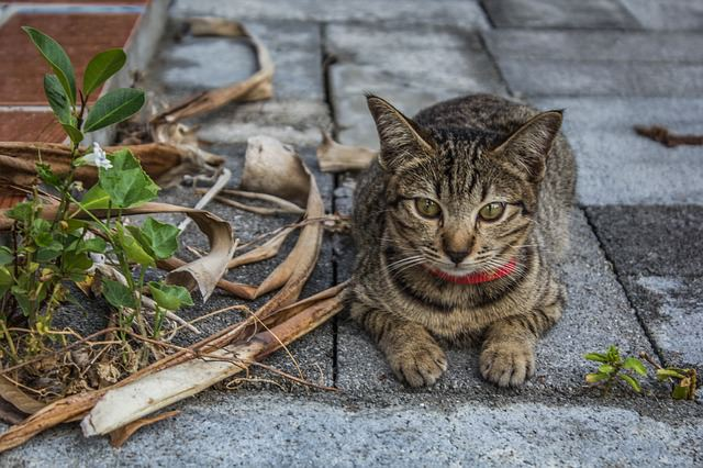 cat-679424_640_mini