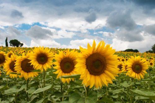 nature-field-summer-quantity_mini